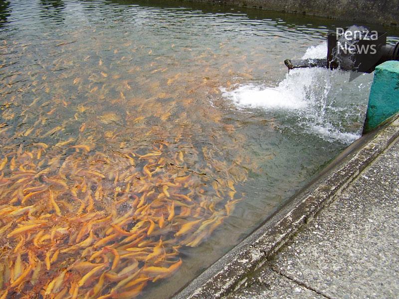 кувака пензенская зона правительственный сайт рыбалка