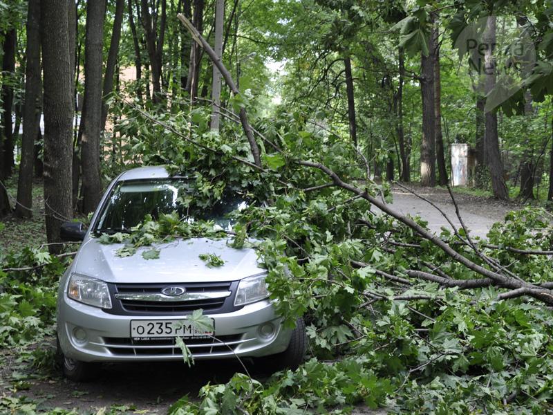 Гражданин Каменки отсудил уадминистрации неменее 47 тыс. заупавшее дерево