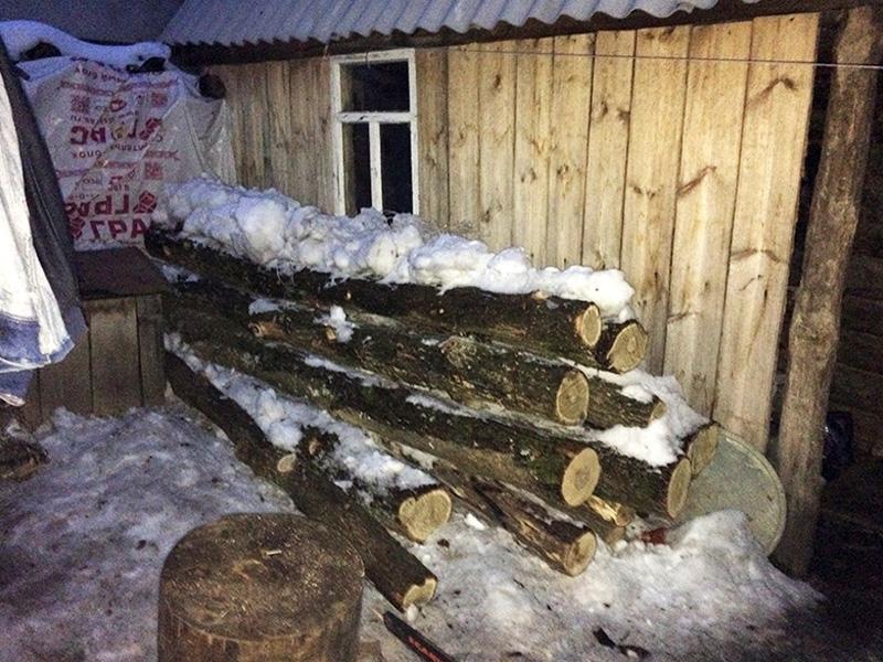 ВПензенской области браконьер увез срубленные деревья насанях