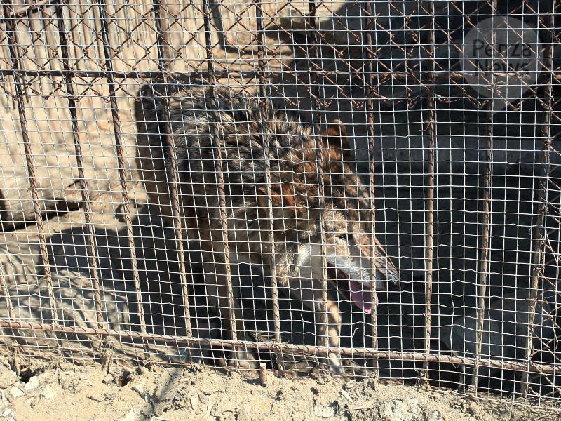 ВРостовской области волк напал напасечника
