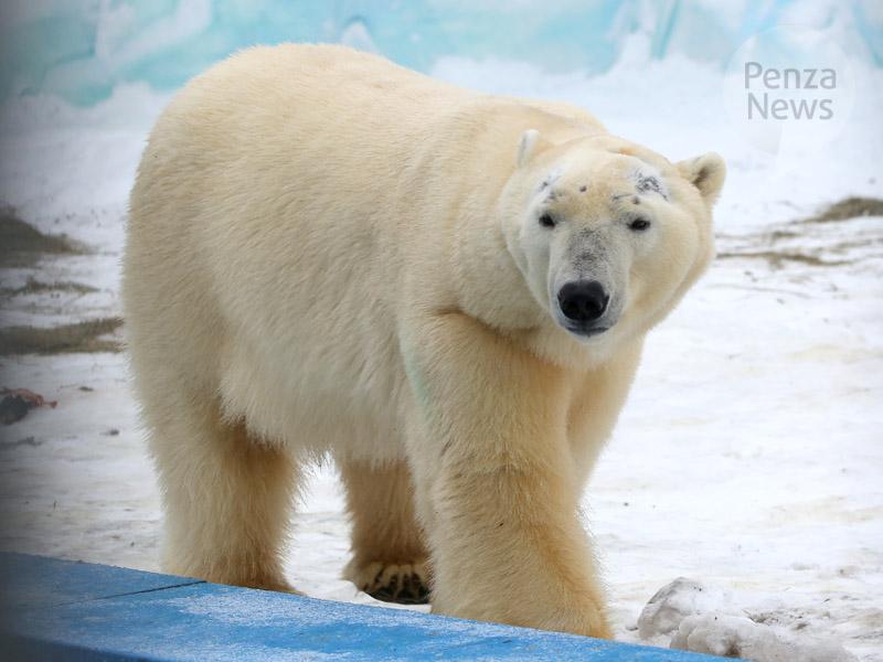 1января Пензенский зоопарк можно посетить бесплатно