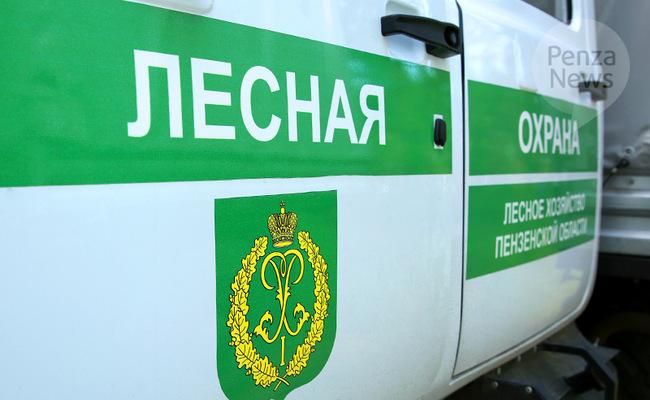 В Пензенской области выявлены нарушения охотничьего законодательства